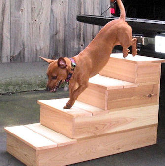 Quad Cedar Pet Step
